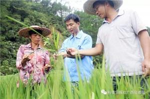 广西平南:科技为扶贫产业添羽翼