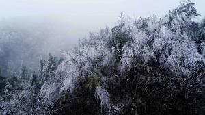 高清:融安县高寒山区出现雾凇景观