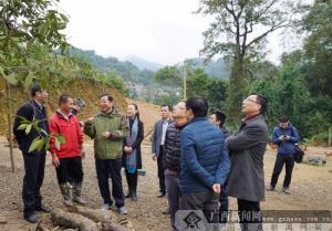 中国人寿集团公司总裁到广西龙州县开展扶贫调研