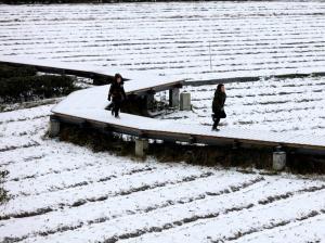 柳州市区雨夹雪 北部三县银装素裹多家景区暂关闭