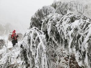 """广西景区""""两重天"""":有的遇冷则冷 有的遇冷反热"""