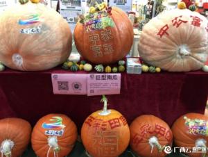 首届中国(广西)老品牌博览会开幕