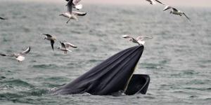 1月21日焦点图:涠洲岛海域发现18头布氏鲸