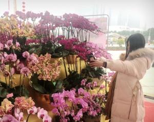 首届广西迎春花市在邕开市 展出时间持续至2月1日