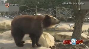 游客误把苹果手机喂棕熊