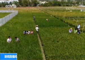 """【履职一年间】杨莹:让小种子造就南繁新""""硅谷"""""""