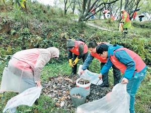 """梨花盛开爱心""""绽放"""" 志愿者在梨花树下清理垃圾"""