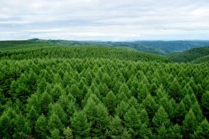 【京津冀这五年】打call绿色发展,三地才会天更蓝水更绿