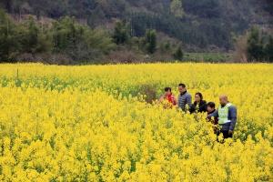 高清:雨水充沛天气回暖 融安群众田间春耕备耕忙