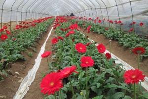 田阳发展苗木花卉等绿色产业实现生态富民(组图)