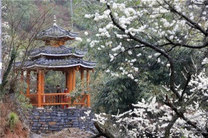 高清图集:来融安踏青赏花 赴一场春天的约会