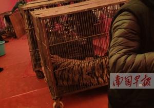 一马戏团在南宁一广场表演时 猛兽演出被叫停(图)