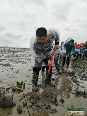 防城港:志愿者在风雨中植树