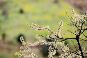 高清:融安繁花盛开 春日山村好踏青