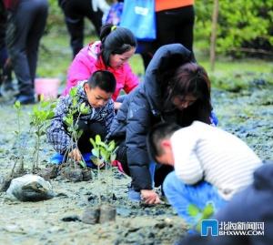 北海:800人湿地公园种红树