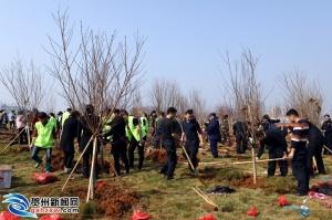 贺州市开展2019年全民义务植树活动