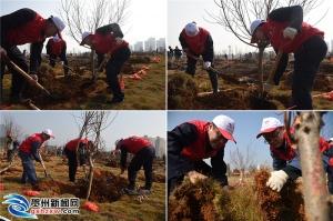 贺州开展志愿者植树活动 为城市添一份绿
