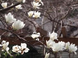 上海:花开春意暖