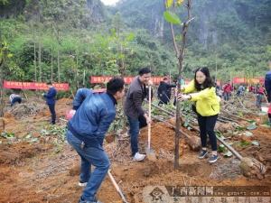 崇左保险行业协会积极组织参与植树公益活动