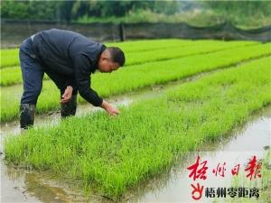 梧州市各地全面进入春耕备耕阶段