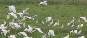 北海涠洲岛成候鸟¡°天堂¡± 鸟类大量聚集场面壮观