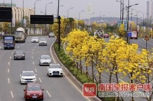"""南宁春来早鲜花开满城 这些都是赏花""""网红路"""""""