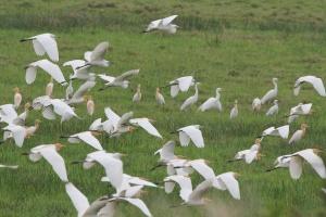 """北海涠洲岛成候鸟""""天堂"""" 鸟类大量聚集场面壮观"""