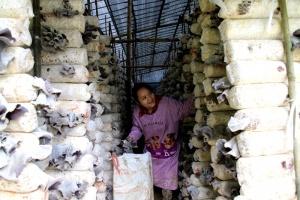 大新县引进了一批产业扶贫项目