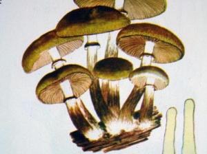 """高清:广西常见的十种剧毒蘑菇 别信""""鉴?#23613;?#31192;方"""