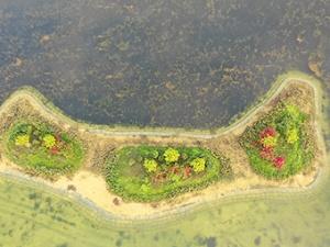 12日焦点图:生态岛上花争艳 南湖公园美景再升级