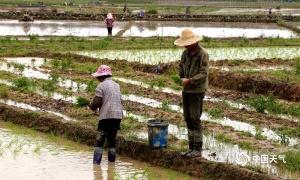 高清组图:田阳强降雨过后 农民抢晴忙春耕