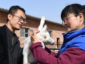 张向阳:白领程序员返乡开启羊倌人生