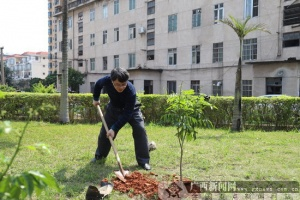 农行港南支行开展植树活动