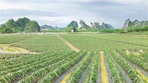 南宁:打好现代特色组合牌 推动农业高质量发展