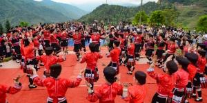 高清:龙胜举办古树茶文化节