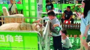 """桂林:上千市民游客与""""萌宠""""一起过节日"""