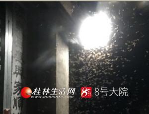 """權威發布!""""飛蟻大軍""""是白蟻在繁殖"""