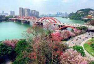 """柳州紫荊花園規劃總平圖公示 為""""一環兩帶五片"""""""