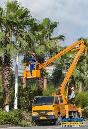 防城港園林管理部門對中心區主要街道綠化樹木進行剪修整理