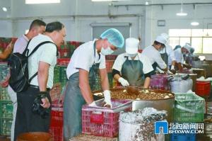 """讓北海海鴨蛋""""越滾越大""""——海鴨蛋產業調研報告(下)"""