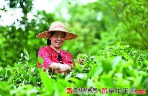 【视觉玉林】炒茶,浓香飘出福绵深山