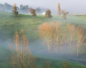 新西兰的冬日晨雾