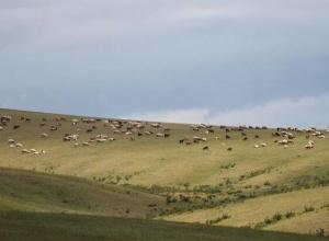 蒙古国草原夏日美景