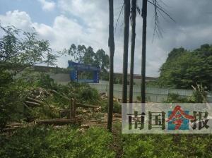 柳州一工地负责人为施工擅自砍树 或面临巨额�?�