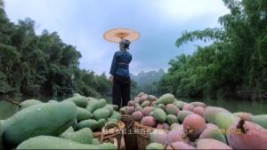 視頻 | 央視發布精準扶貧公益廣告《百色芒果》