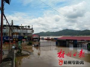 預計西江梧州水文站將出現超警戒水位洪水