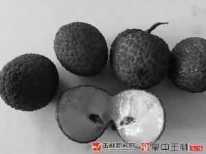 玉林荔枝产业硬伤软肋突然变成了优势