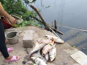 上游洗涤厂废水溢出 南宁一村庄七个鱼塘遭殃(图)