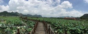 上林县打造高值渔扶贫产业观察