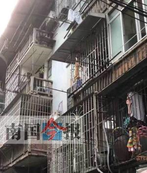 猫咪悬挂在阳台曝晒死亡 有人虐猫还是猫不小心?